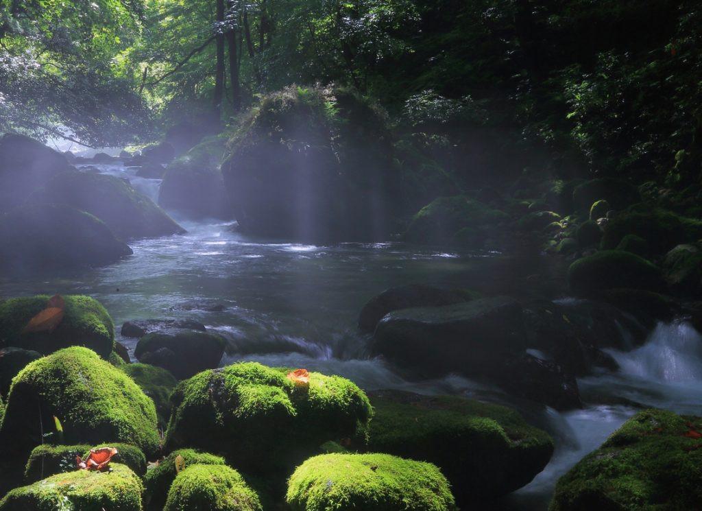 九頭竜川 福井県勝山市   FISHPASS(フィッシュパス)