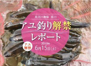 2019耳川(福井県)アユ解禁レポート