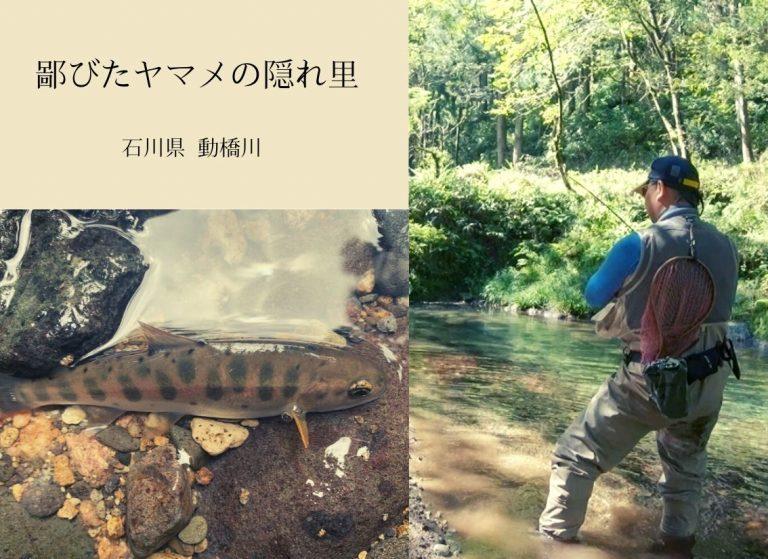 鄙びたヤマメの隠れ里(石川県 動橋川)