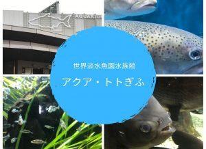 とても珍しい淡水魚の水族館