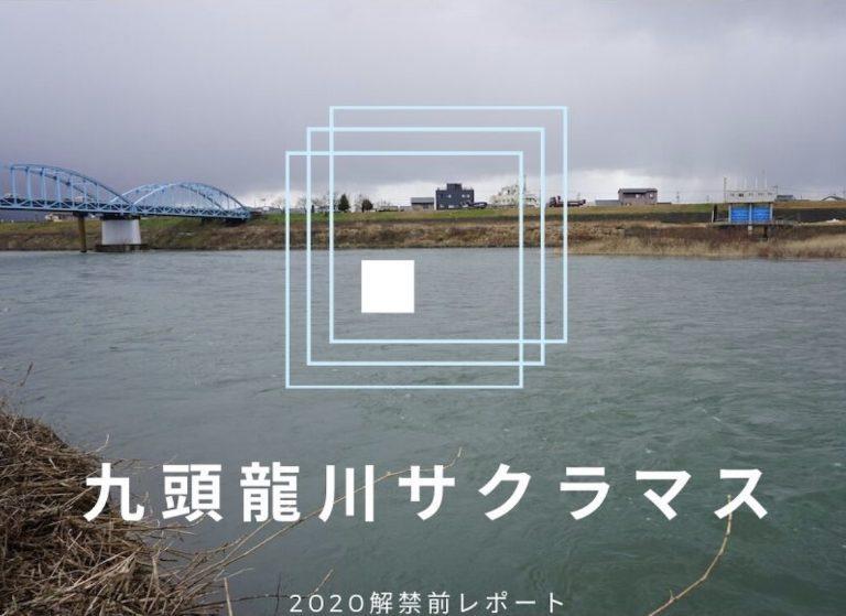 解禁前レポート:九頭龍川サクラマス 2020