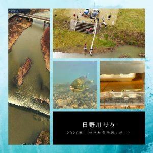 日野川の想い〜サケよ 必ず戻ってこいよ〜