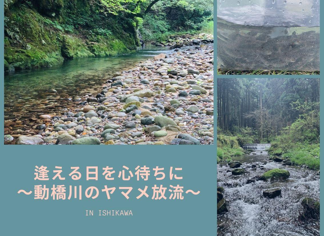 日 橋川 水位