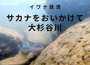 サカナをおいかけて大杉谷川(動画あり)