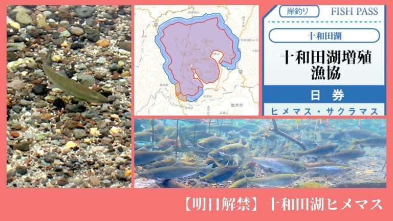 【明日解禁】十和田湖ヒメマス
