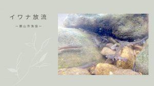 イワナ放流(勝山市漁協)